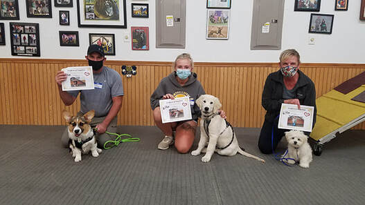 Go Over Rover Dog Training in West Bend offers Puppy Class for pups ages 8-24 weeks. Your puppies will learn Sit, Down, Walking Nicely and the first steps of coming when called.