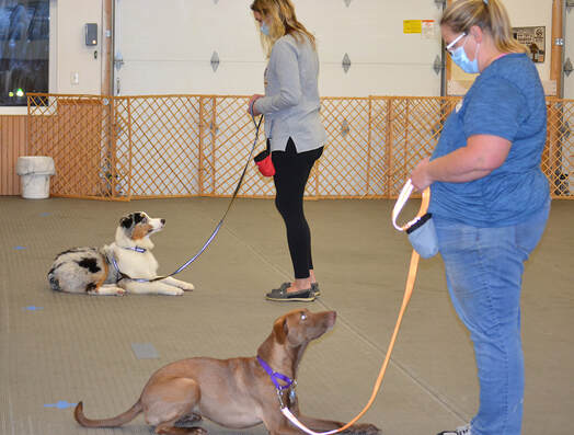 Go Over Rover Dog Training in West Bend offers Basic Obedience class for dogs six months and older. Your dog will learn Sit, Down, Stay, Loose Leash Walking, Coming When Called and Leave it.